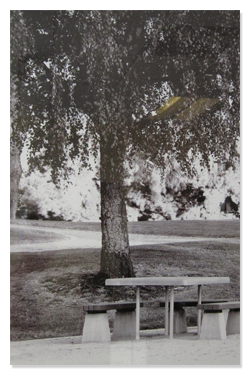 Eastside Prep History - Picnic Table